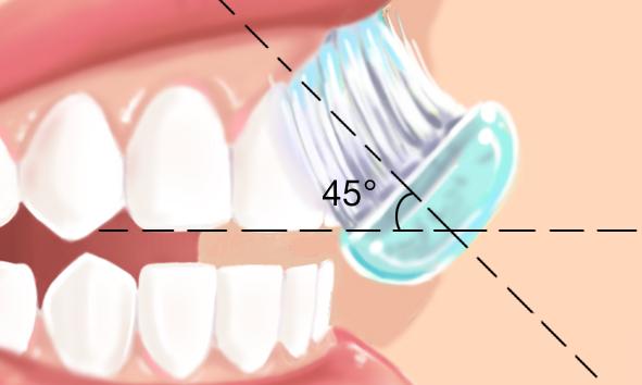 La brosse à dent s'incline à 45 degrés